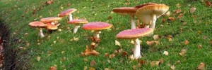 5807_toadstool500