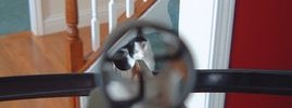 5881_cat_crossbow