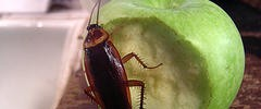 7349_1311.roach