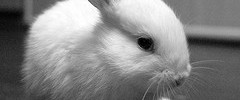 7447_bunny