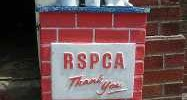 8537_rspca