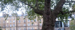10454_quakertree