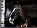 12278_2703_horse