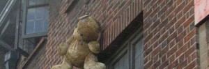 14391_Hangingbear