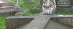 Squirrel on a grave by Matt From London, with permission
