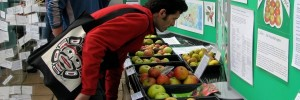 Apple Day at Roots and Shoots in 9 October