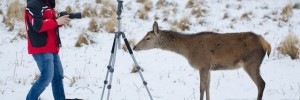 photographer_vs_deer001_lores