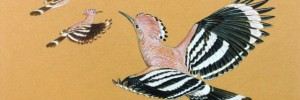 D.I.M. Wallace, Absolutely Fabulous Hoopoes. Image courtesy of Mall Galleries