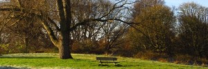 autumn-tree-bench