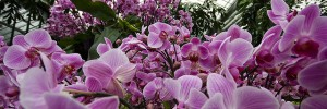 Orchids at Kew by teddave