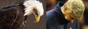 Bald eagles that look like Arsene Wenger
